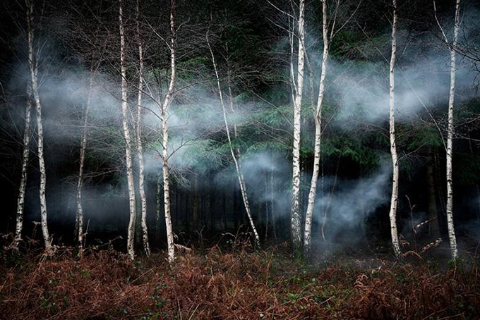 Среди деревьев - Элли Бергер