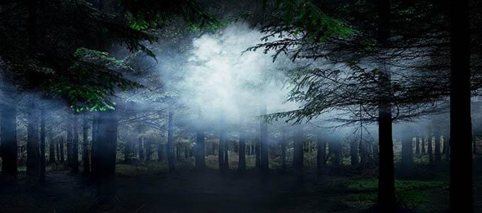 Среди деревьев - удивительные фотографии леса